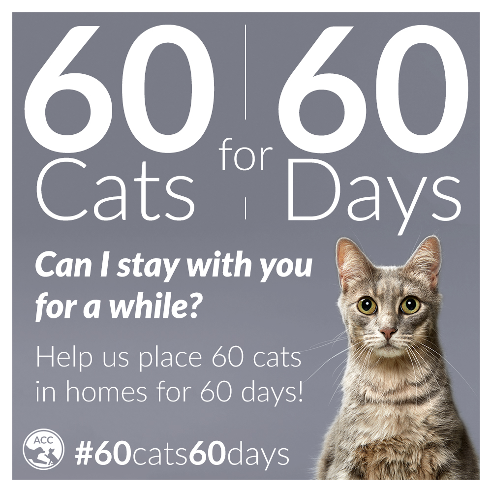60 cats 60 days