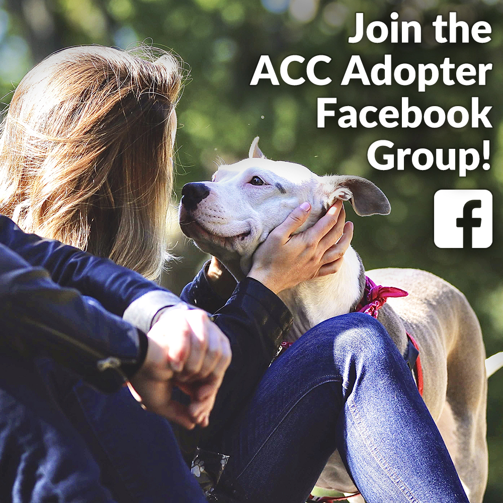 ACC Adopter Facebook Group
