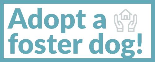 Adopt a foster dog!