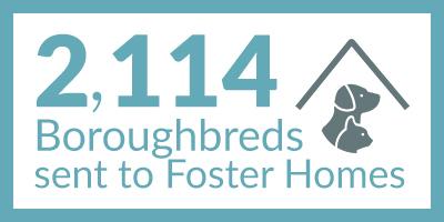 Animals Sent to Foster_PostQuarantine