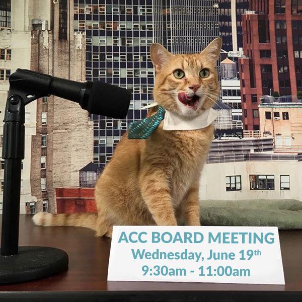 Board Meeting June 2019