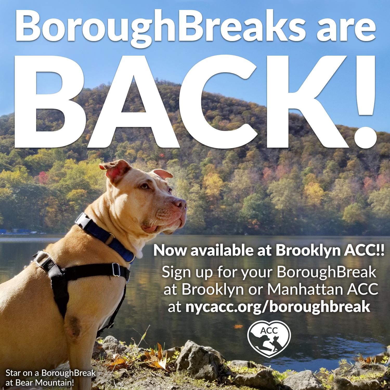 Boroughbreaks are back!