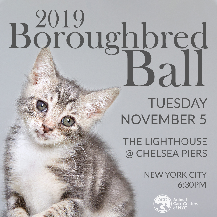 Boroughbred Ball 2019