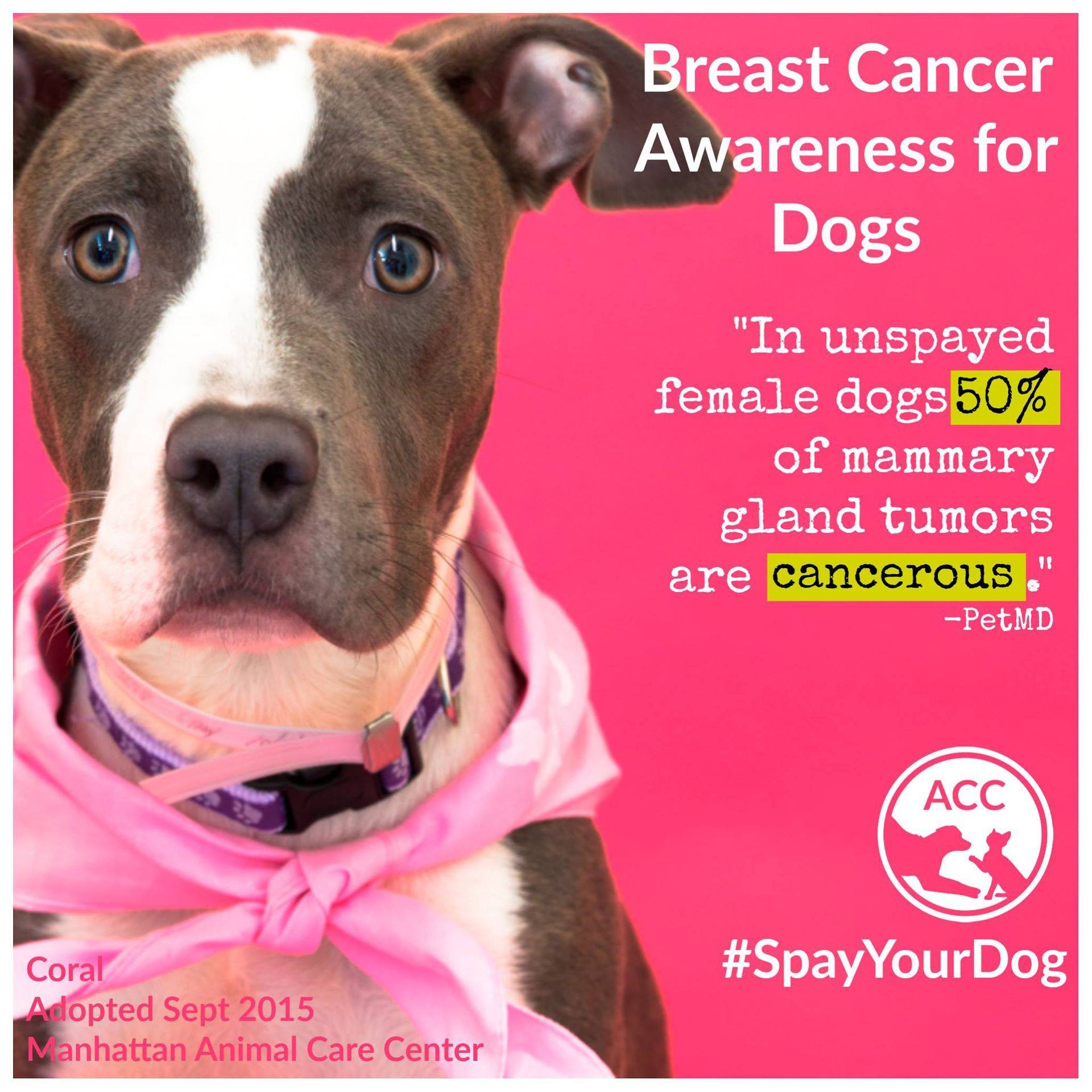 Breast Cancer Awareness Dogs