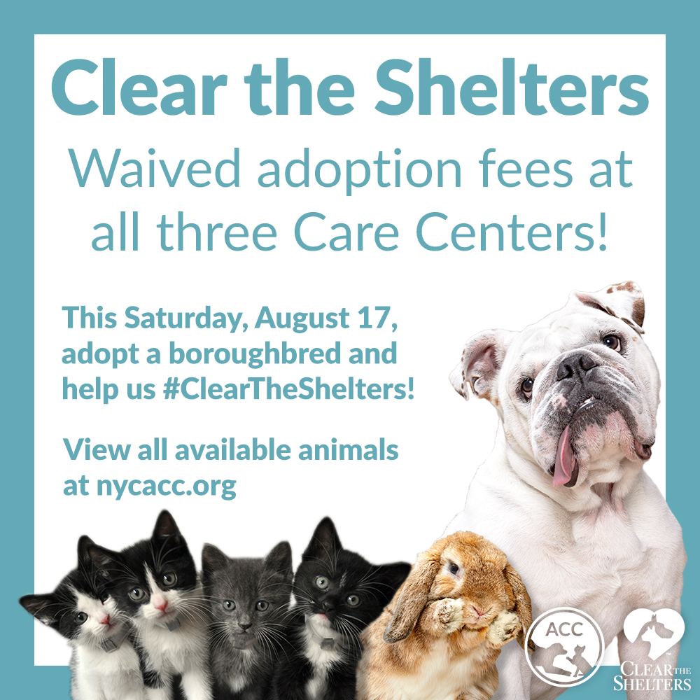 Clear The Shelters graphic 2019
