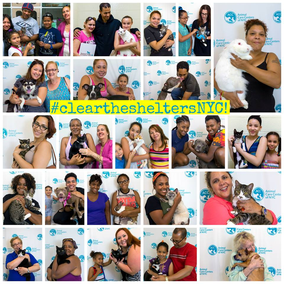 Clear the Shelters collage