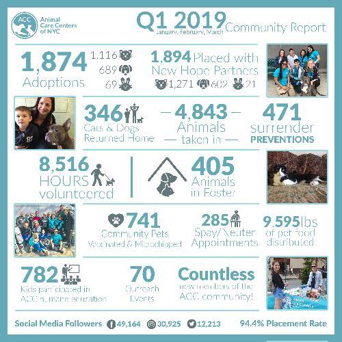 Q1 2019 community report