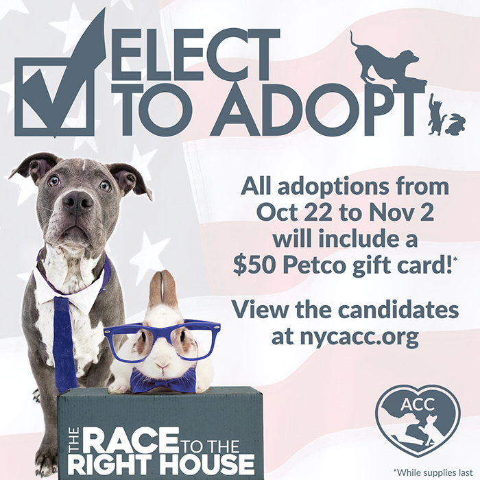 Elect to Adopt 2020
