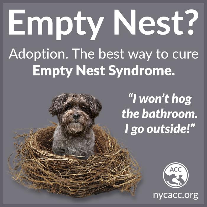 Empty Nest Promo 1