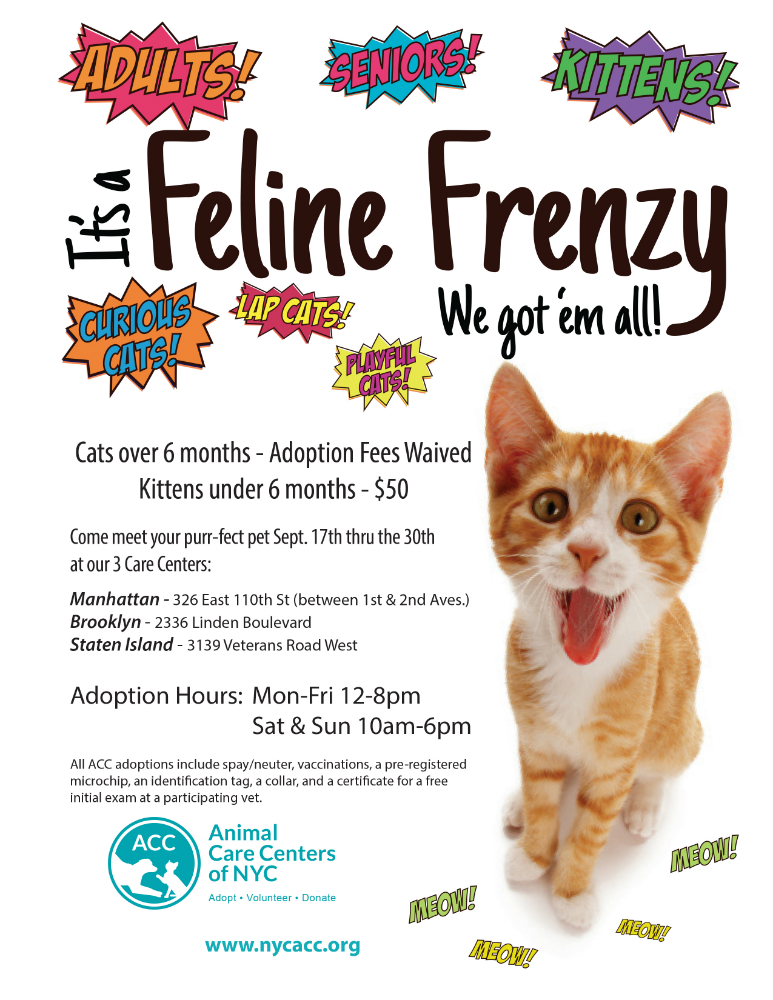 Feline Frenzy flyer