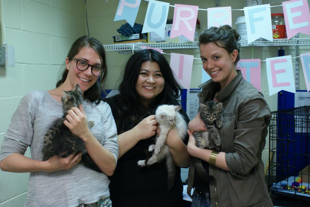 new kitten fosters!