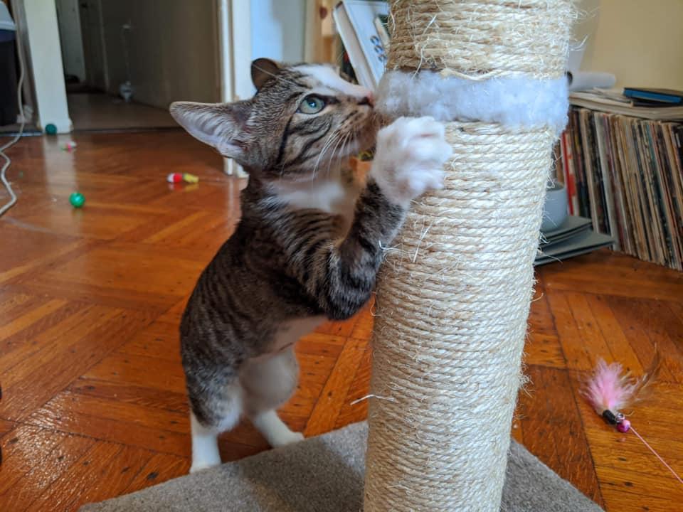 jamie the cat!