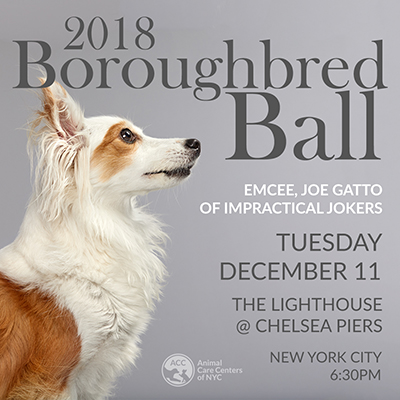 boroughbred ball invite