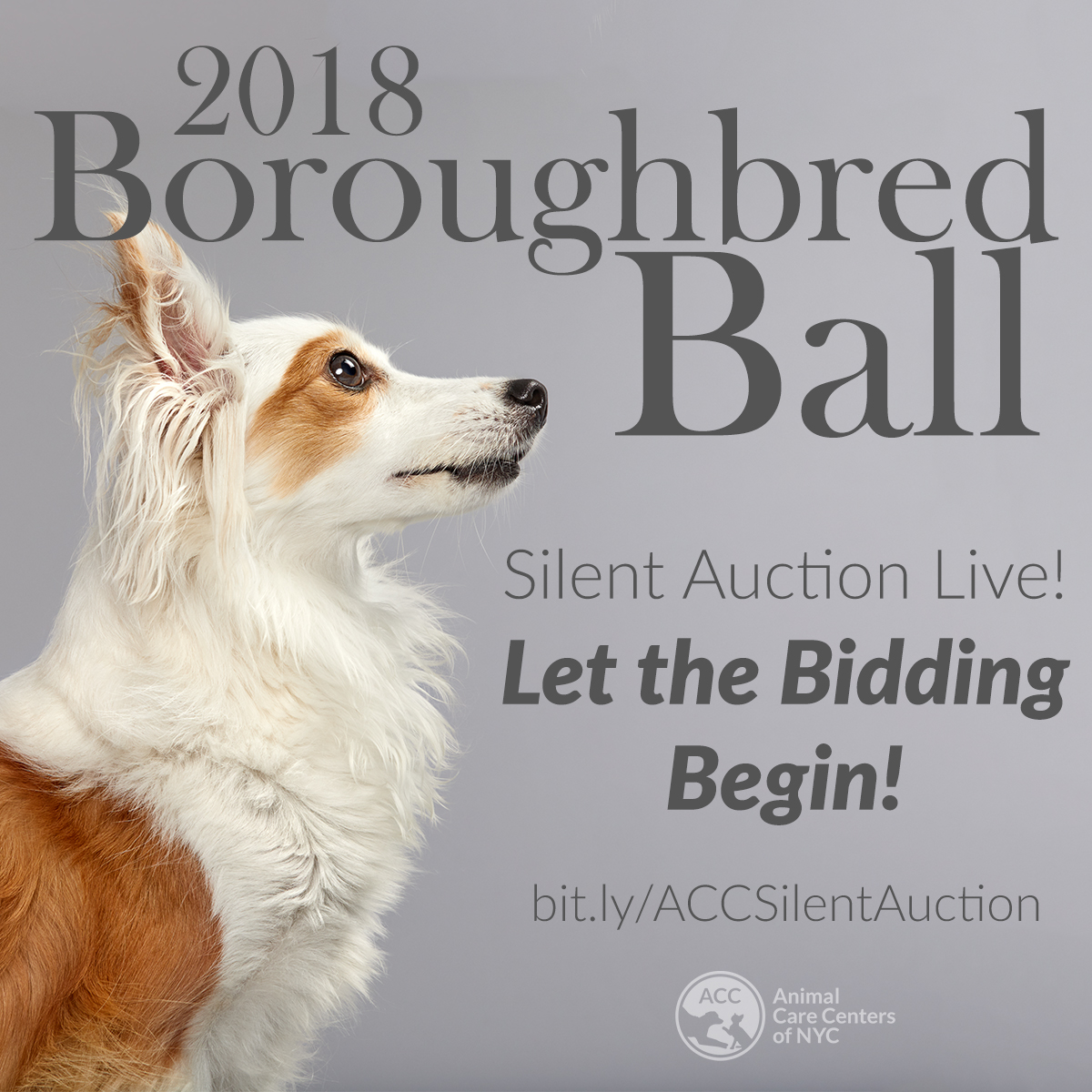 Silent Auction Live boroughbred ball 2018