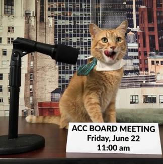Board Meeting Date