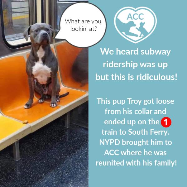 Lost_Dog_Subway