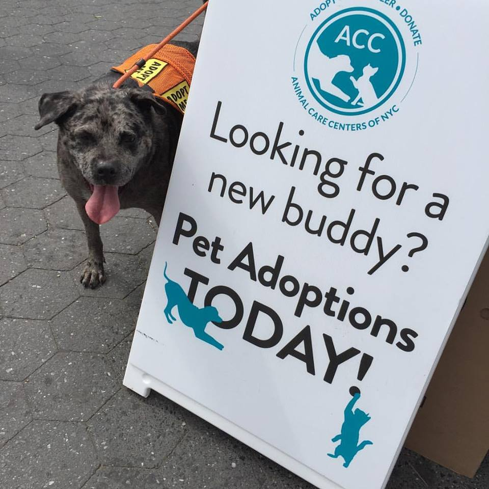 Louie by adoption sign