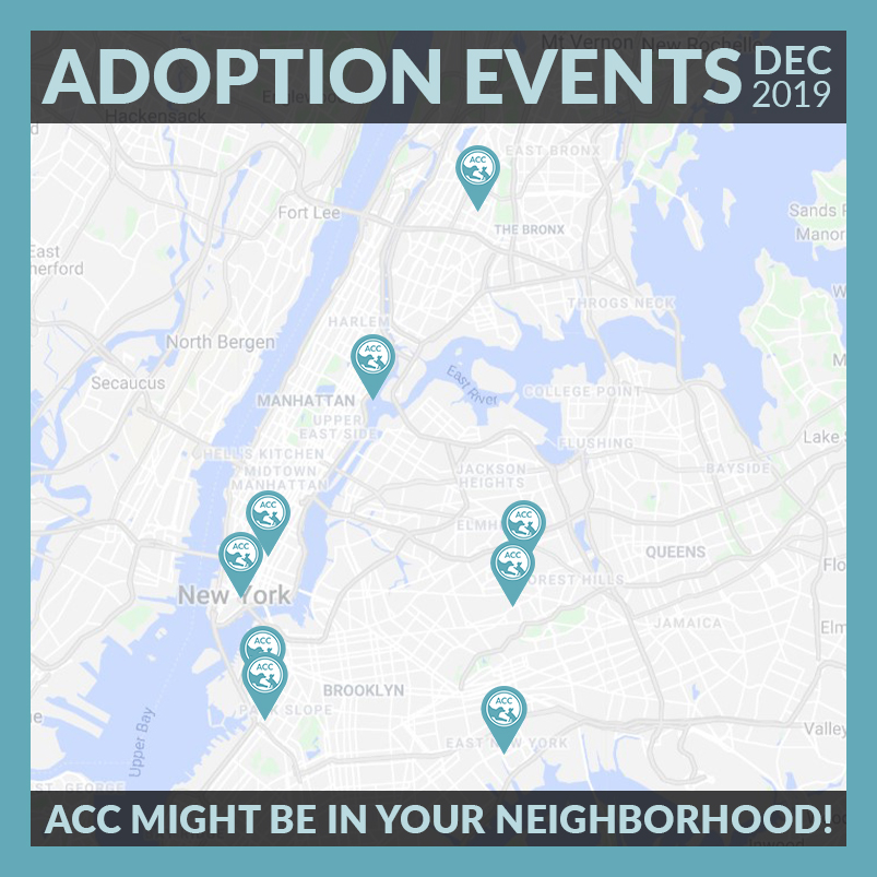 December 2019 Adoption Events