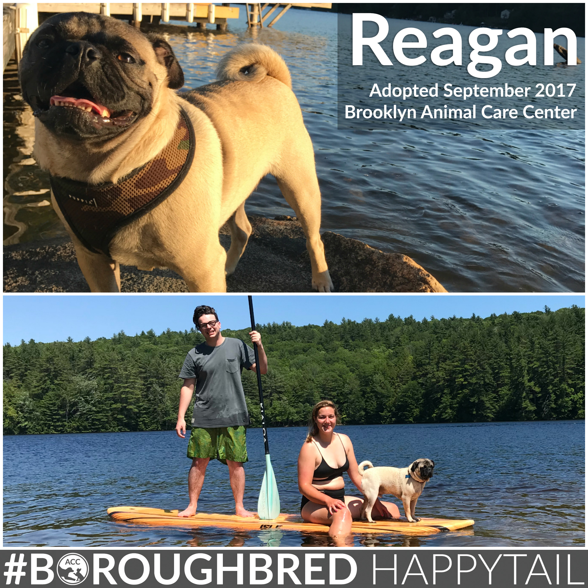Reagan Happy Tail