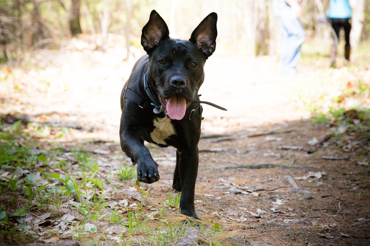 Schuyler running