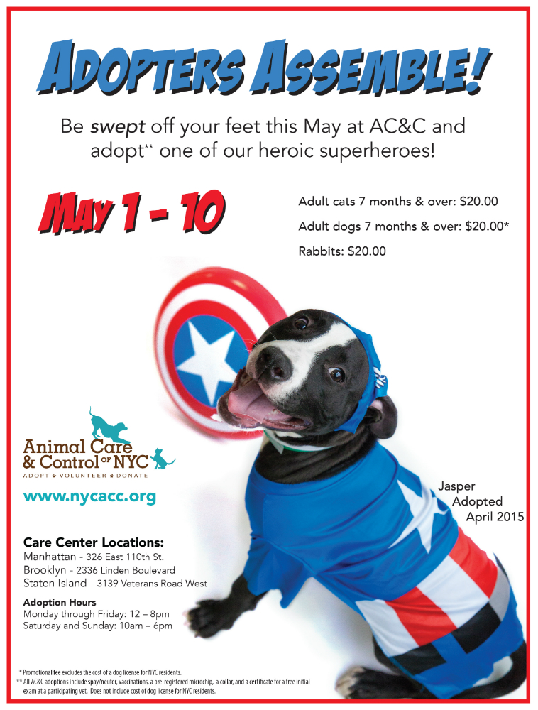 Superheroes adoption special flyer