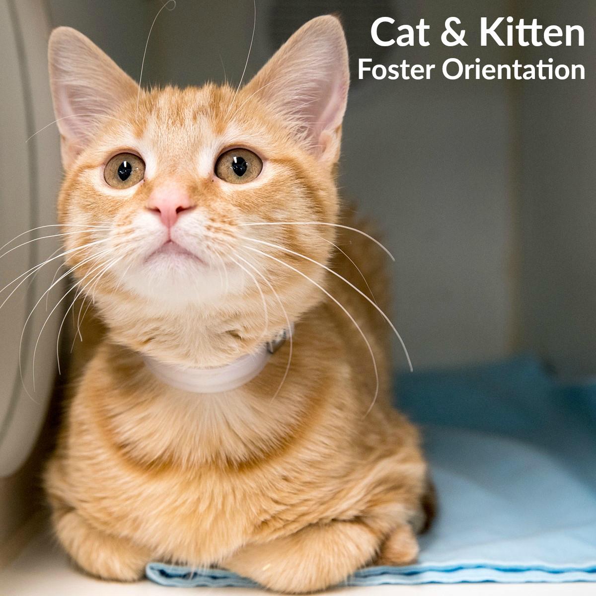 Cat and Kitten Foster Orientation