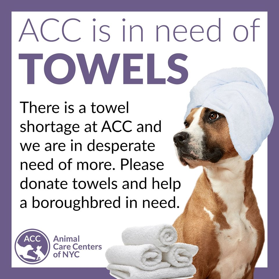 ACC Towel Plea