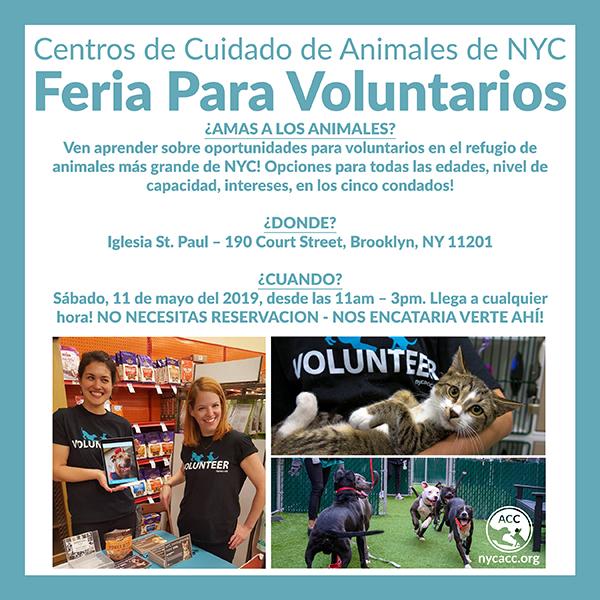 Volunteer Fair May 2019