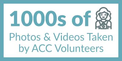 ACC Volunteer Stats EOY 2020