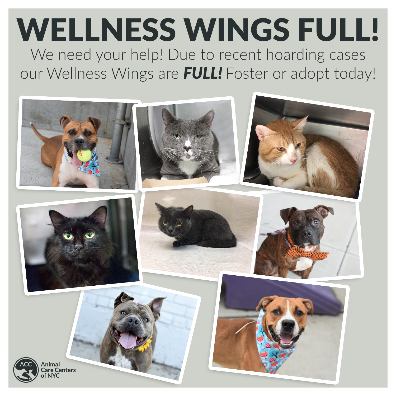 Wellness Wings Full