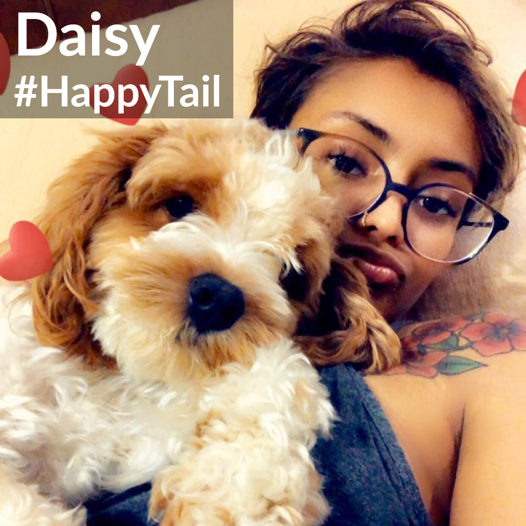 Happy Tail Daisy
