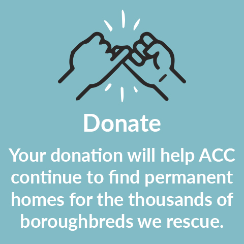 Donation boroughbred template