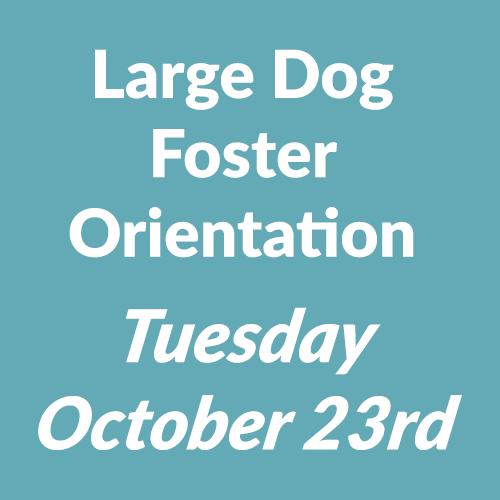 foster orientation 23