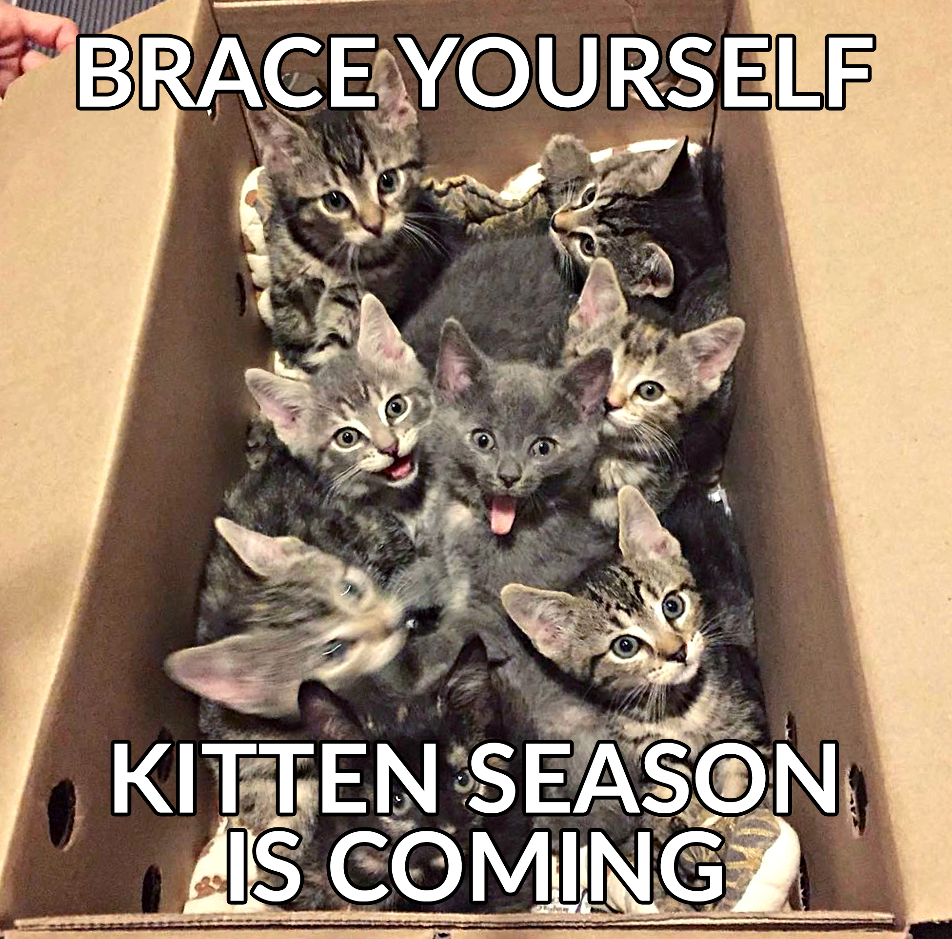 Kitten season is coming