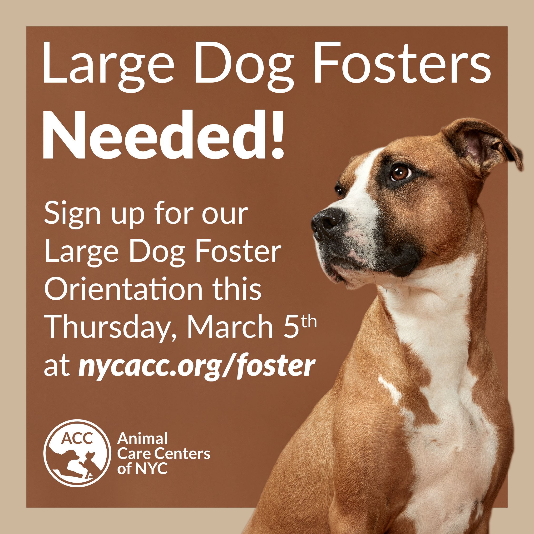 Large dog foster orientation