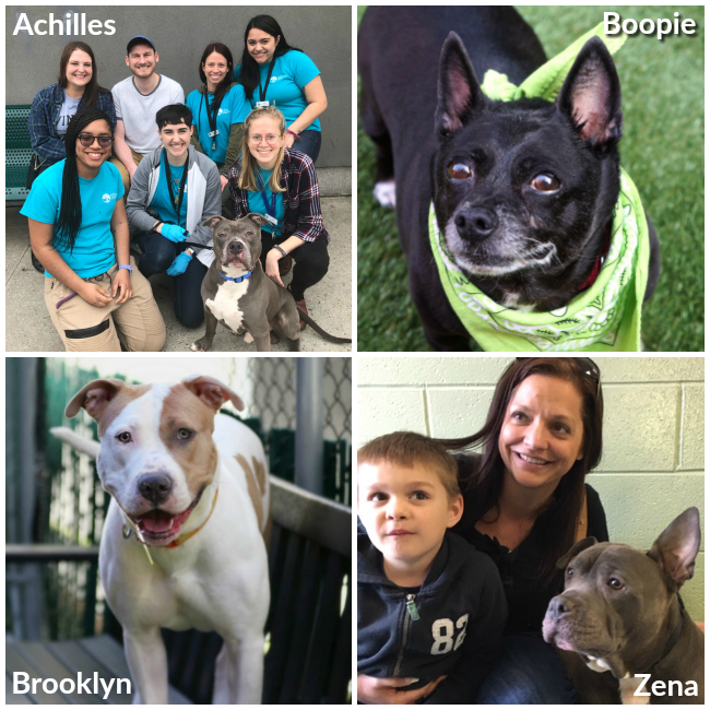 Long Stay adoptions april 2019