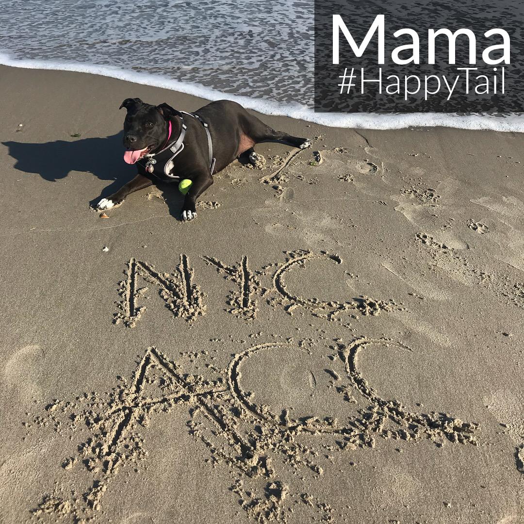 Mama Happytail 3