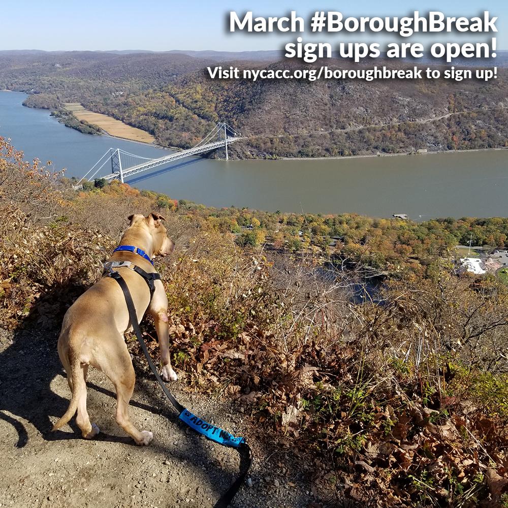 march boroughbreaks