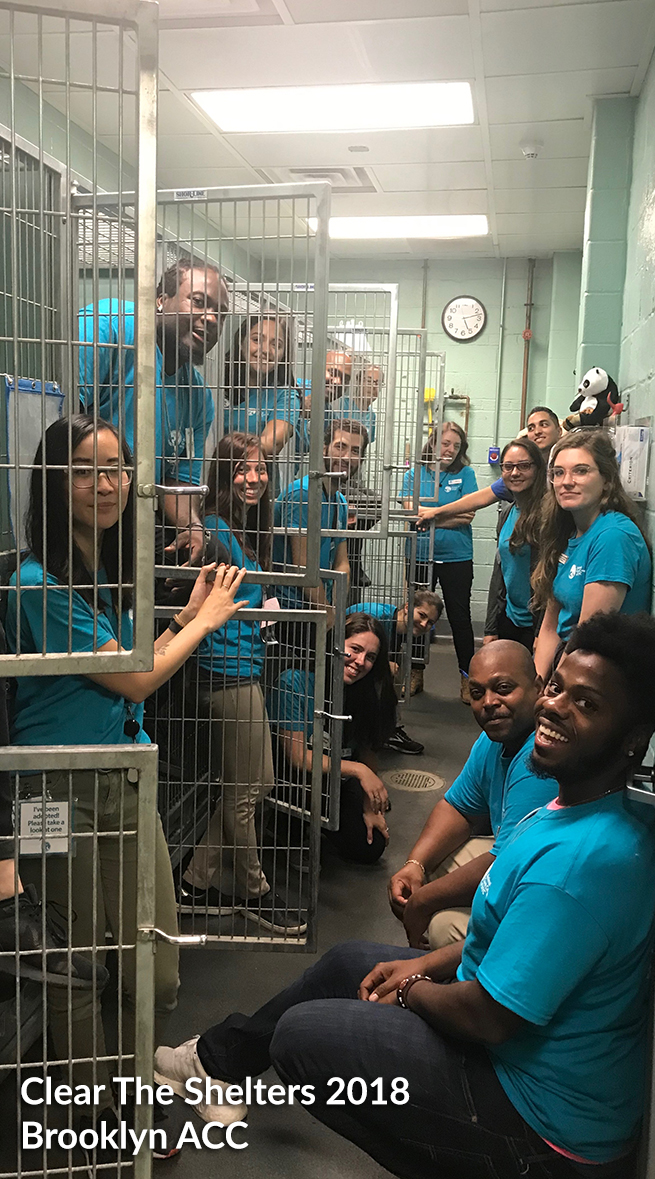 Clear The Shelters 2018 aftermath 1
