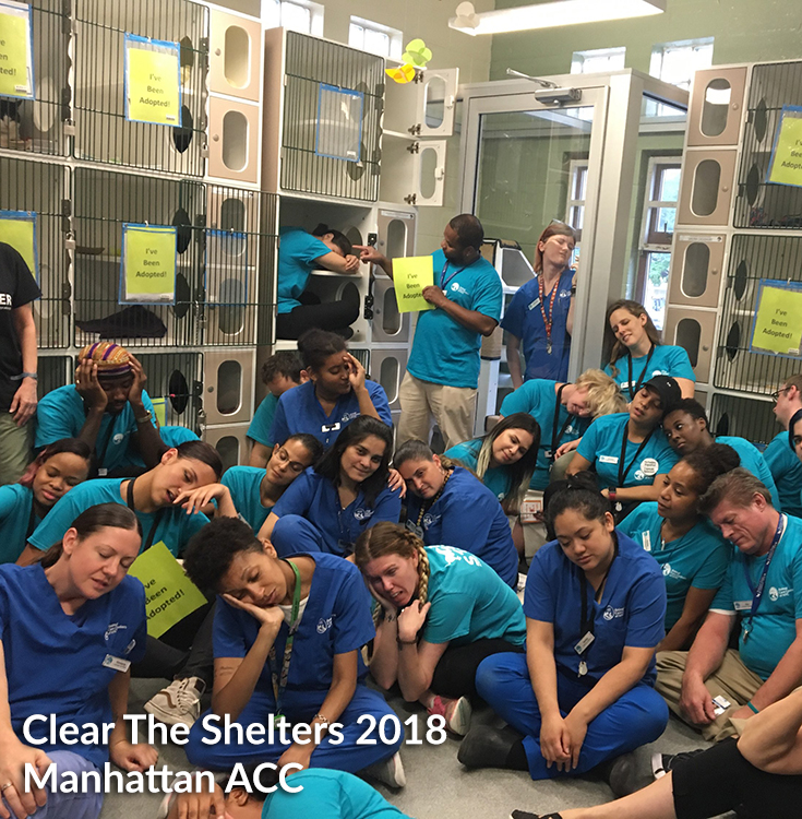 Clear The Shelters 2018 aftermath 3
