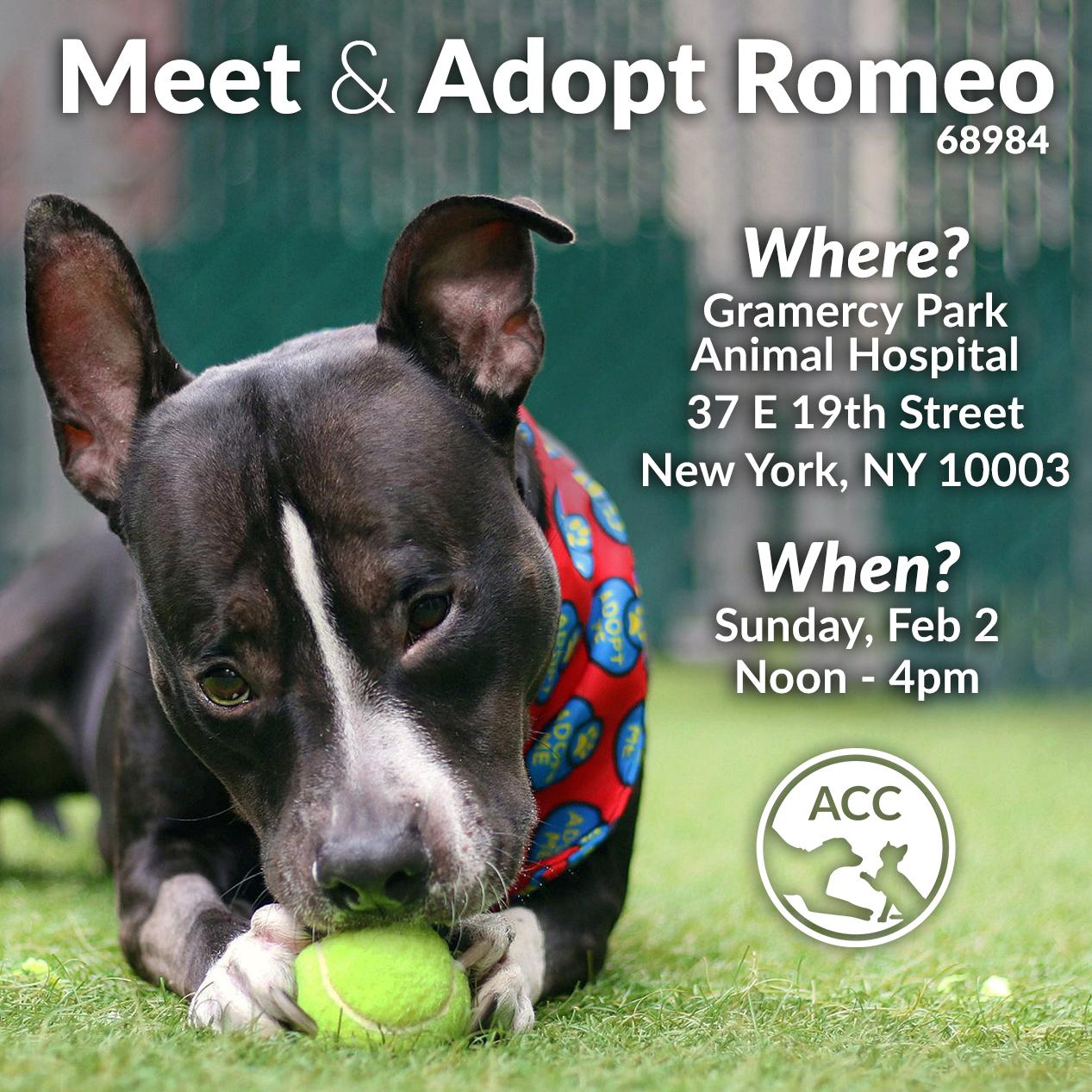 Meet and Adopt Romeo Feb 2