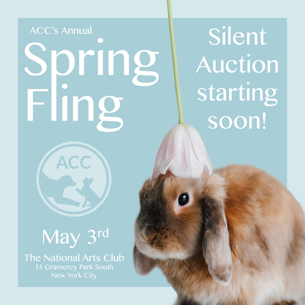 spring fling 2019 silent auction soon