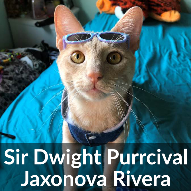 Sir Dwight Happy Tail 2