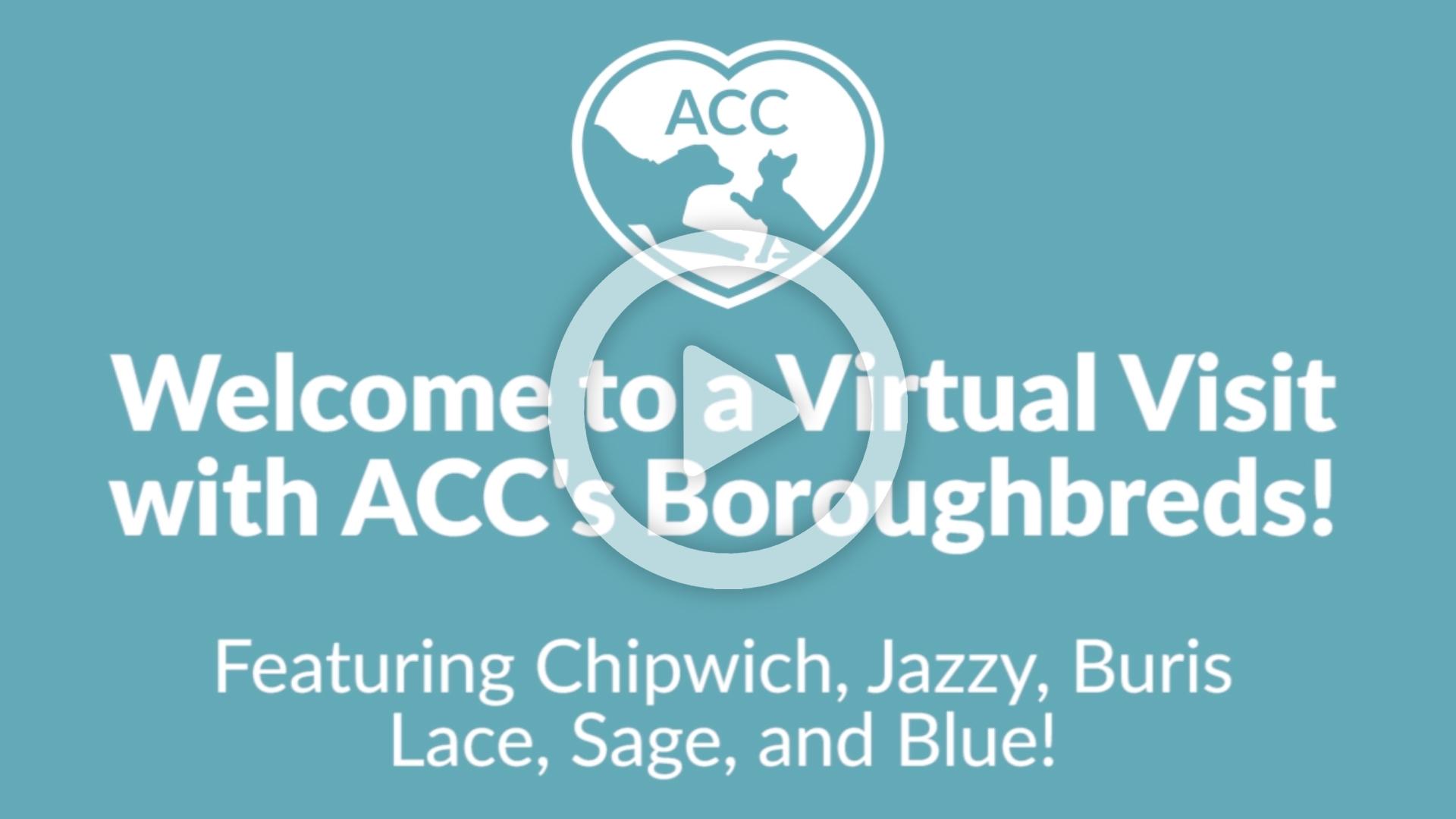 virtual visit 807